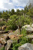 Jardim alpino Foto de Stock Royalty Free
