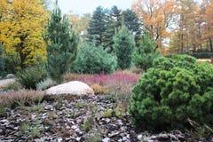 Jardim alpino bonito com coníferas e urze Imagem de Stock Royalty Free