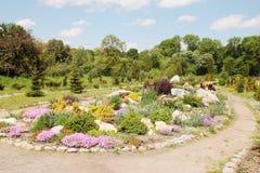 Jardim alpino com plantas Fotos de Stock