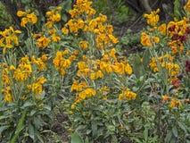 Jardim amarelo Fotografia de Stock Royalty Free