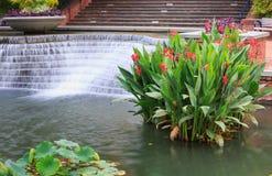 Jardim aquático Frederick Maryland da água fotografia de stock royalty free