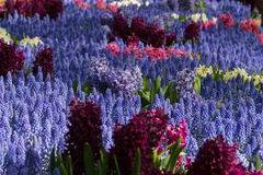 Jardim azul Imagem de Stock Royalty Free