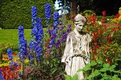 Jardim azul do delfínio imagens de stock royalty free