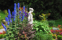 Jardim azul do delphinium imagens de stock royalty free