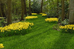 Jardim bonito Imagem de Stock Royalty Free