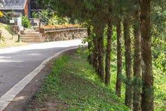 Jardim bonito, beleza ajardinando do jardim público da mola Imagens de Stock
