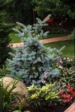 Jardim bonito com árvore spruce Foto de Stock