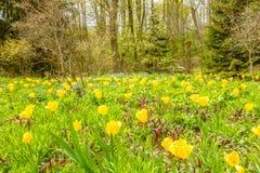 Jardim bonito com flores amarelas fotos de stock