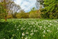 Jardim bonito com flores brancas fotografia de stock