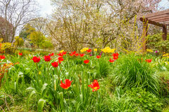 Jardim bonito com flores coloridas fotos de stock royalty free