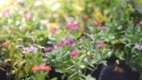 Jardim bonito com flores pequenas Sun que brilha com as flores que florescem na manhã Flor colorida no parque filme