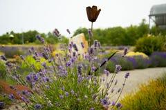 Jardim bonito da alfazema em Sequim Imagem de Stock Royalty Free