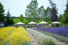 Jardim bonito da alfazema em Sequim 7 Imagem de Stock Royalty Free