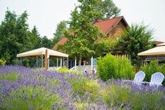 Jardim bonito da alfazema em Sequim 8 Imagens de Stock Royalty Free