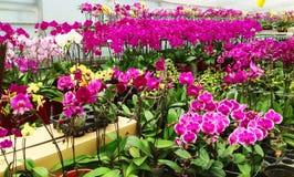 Jardim bonito das orquídeas fotografia de stock