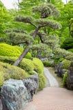 Jardim bonito do estilo japonês com passagem e árvore antiga de japão em Kawaguchiko Fotos de Stock Royalty Free