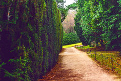 Jardim bonito, trajeto da planta Fotografia de Stock