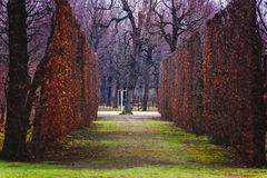 Jardim bonito, trajeto da planta Imagens de Stock