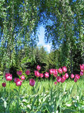 Jardim botânico imagem de stock