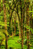 Jardim botânico Imagem de Stock Royalty Free