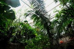 Jardim botânico Foto de Stock