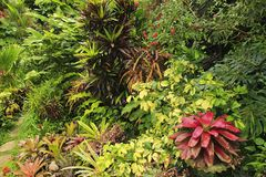Jardim botânico, Barbados, das caraíbas imagem de stock royalty free
