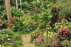 Jardim botânico, Barbados, das caraíbas Fotografia de Stock Royalty Free