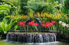Jardim botânico com a decoração bonita da flor foto de stock royalty free