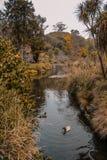 Jardim botânico de Dunedin, ilha sul, Nova Zelândia fotografia de stock royalty free