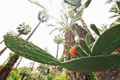 Jardim botânico de Jardin Majorelle Imagens de Stock
