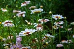 Jardim botânico de Marimurtra em Blanes, Catalonia fotografia de stock