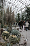 Jardim botânico de Munich Fotografia de Stock
