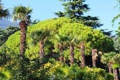 Jardim botânico de Nikitsky foto de stock royalty free