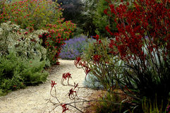 Jardim botânico de San Francisco imagens de stock royalty free