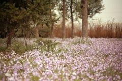 Jardim botânico de Zhengzhou Foto de Stock