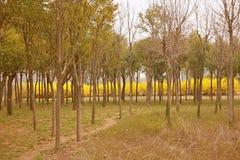 Jardim botânico de Zhengzhou Foto de Stock Royalty Free