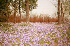 Jardim botânico de Zhengzhou Imagem de Stock Royalty Free