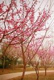 Jardim botânico de Zhengzhou Fotografia de Stock