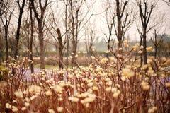 Jardim botânico de Zhengzhou Fotografia de Stock Royalty Free