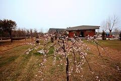 Jardim botânico de Zhengzhou Fotos de Stock