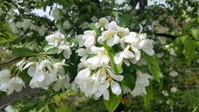 Jardim botânico de Zurique Árvores na flor fotos de stock royalty free
