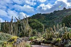 Jardim botânico do cacto em um dia nebuloso imagem de stock