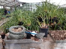 Jardim botânico em Moscovo imagens de stock