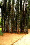 Jardim botânico em Rio de Janeiro Foto de Stock