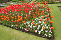 Jardim botânico na flor Imagens de Stock
