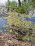 Jardim botânico no awice do 'de WojsÅ do arboreto imagens de stock royalty free