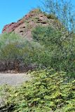 Jardim botânico Phoenix o Arizona do deserto Fotos de Stock Royalty Free