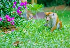 Jardim botânico real Peradeniya, Sri Lanka fotografia de stock royalty free