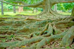 Jardim botânico real Peradeniya, Sri Lanka fotos de stock