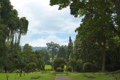 Jardim botânico real Peradeniya, Sri Lanka Imagens de Stock Royalty Free